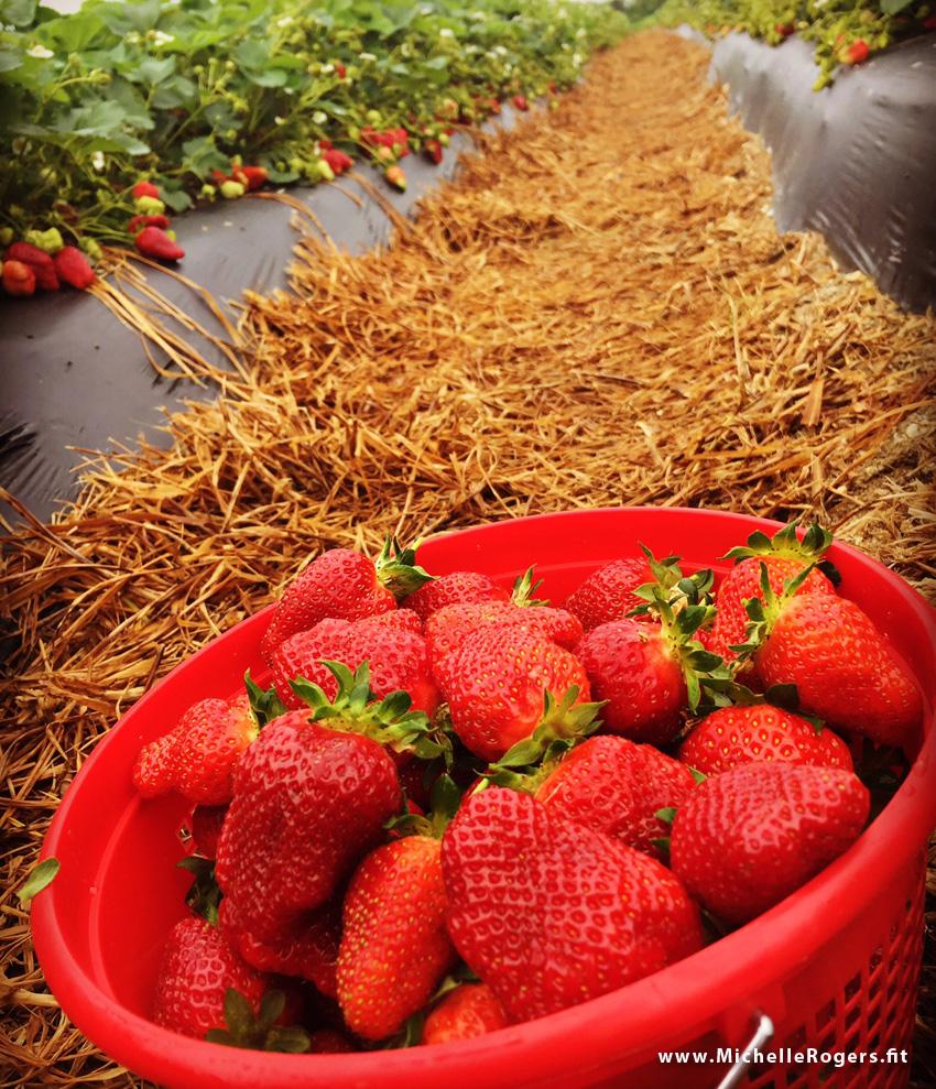 How to pick strawberries at a u-pick farm