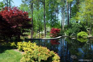 Photo tour: A gorgeous spring walk at Duke Gardens