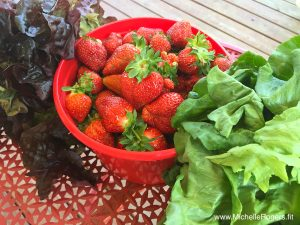 How to pick strawberries at a u-pick farm + 4 delicious recipes