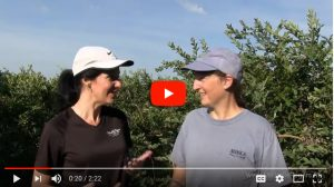 VIDEO: How to pick blueberries